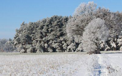 Wir haben Schnee